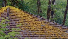 The Challenges Of Roofing In Vancouver